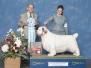 Conformation Dog Show